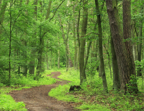 FLA Applauds Maine Congressional Delegation for Recognizing Importance of Timber Farmers