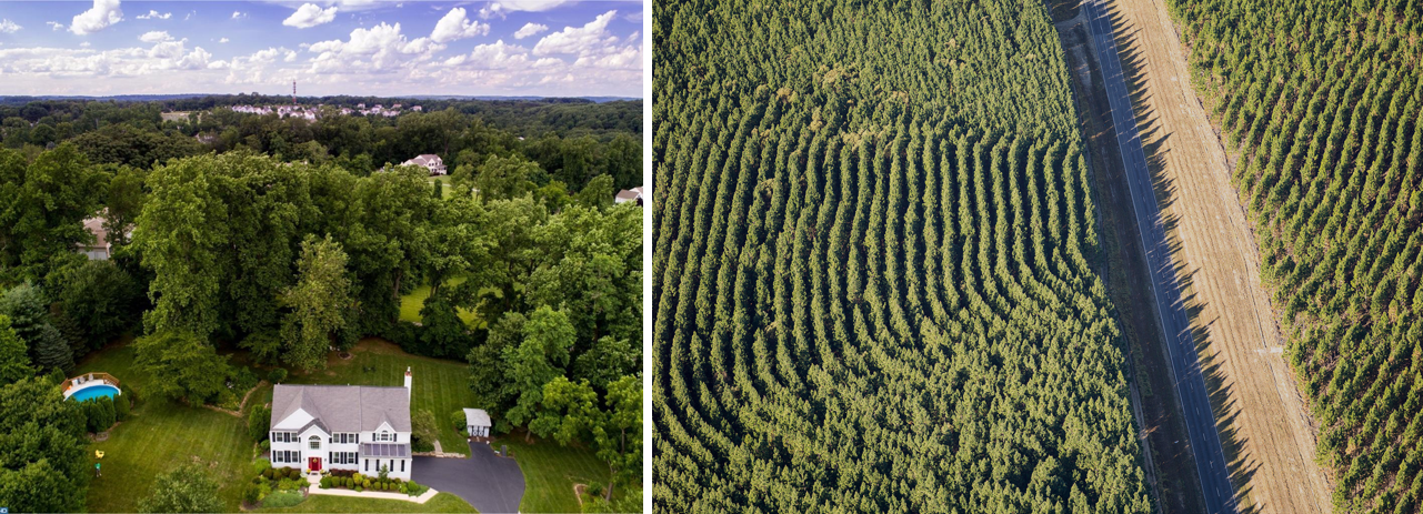 Backyard woodland in the suburbs vs. a managed, contiguous forest